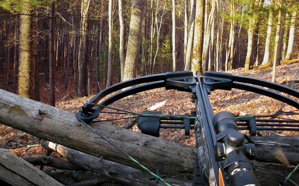 best crossbows for the money featured