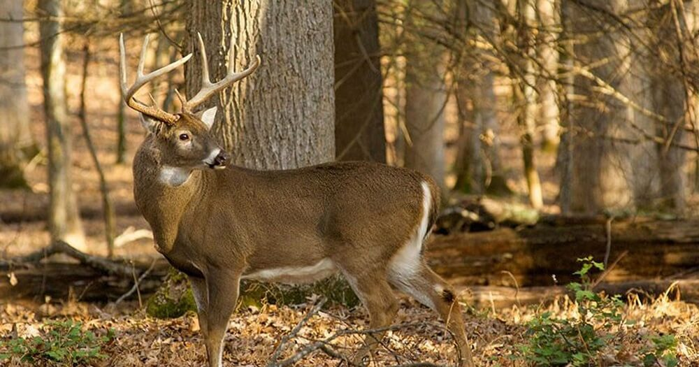 how to see more deer while hunting_featured